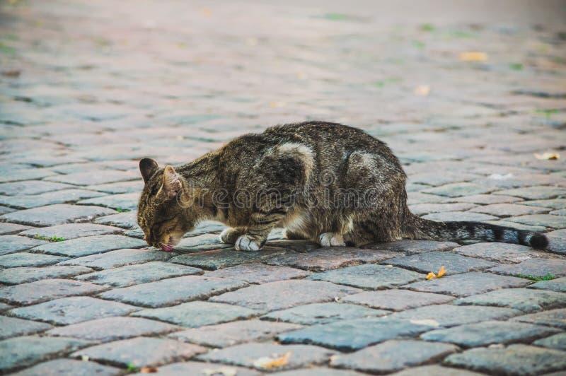 Utvändig fattig tillfällig katt äta något från jordningen Begrepp av det hemlösa djuret royaltyfria bilder