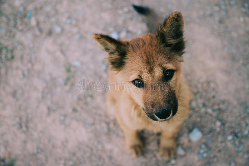 Utvändigt hållande ögonen på stirra för hemlöst hundsammanträde på kameran arkivbild