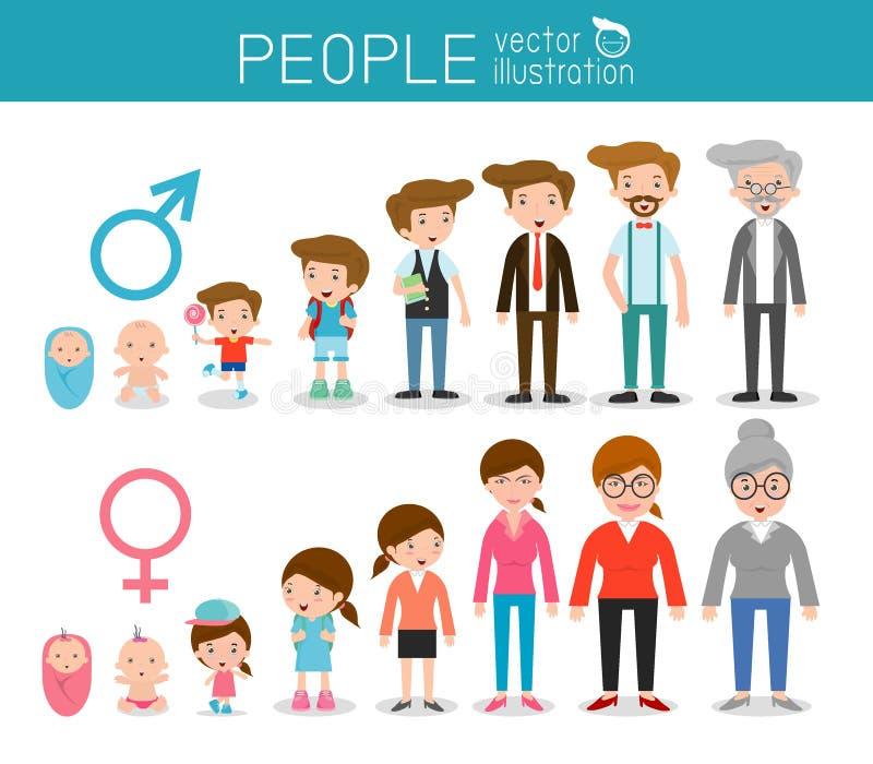 Utveckling av folk från spädbarn till junior Alla åldras kategorier isolerat på vit bakgrund, utvecklingen av folkmannen och kvin stock illustrationer