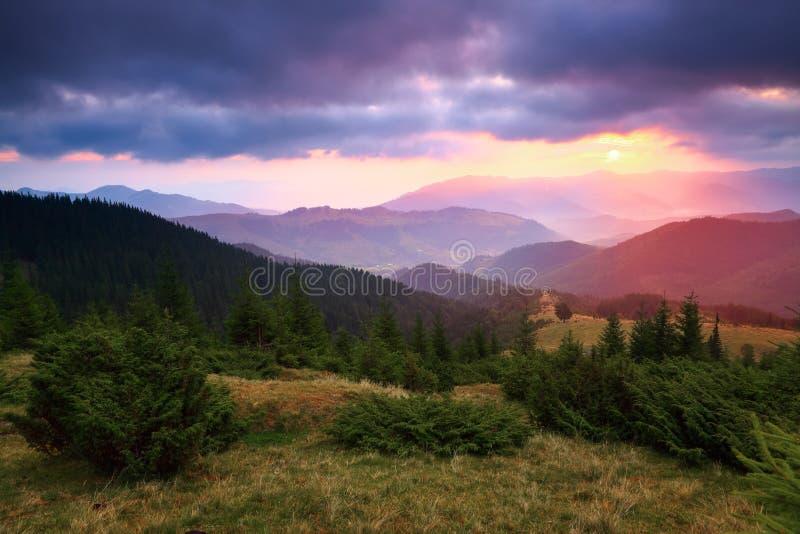 UUnder el cielo púrpura coloca las colinas de la montaña cubiertas con los pinos del arrastramiento foto de archivo libre de regalías