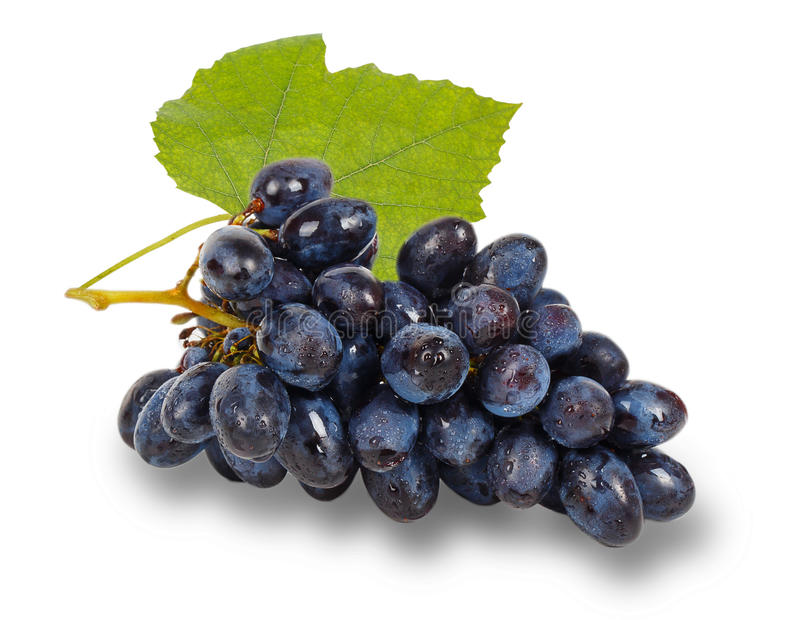 Uva azul con la hoja verde imagen de archivo libre de regalías