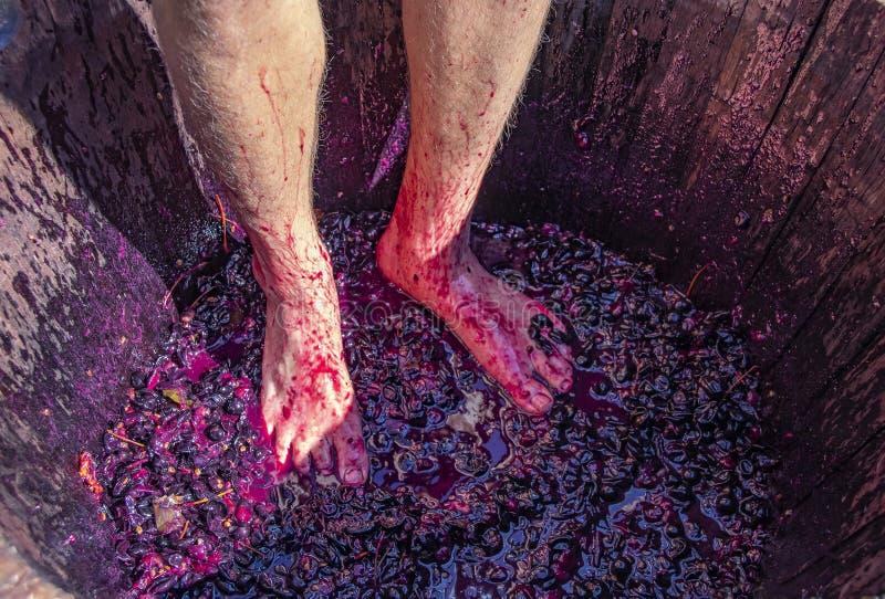 Uva battere i piedi - equipaggi i piedi del ` s con le gambe pelose in barilotto di legno con smushed sull'uva fotografia stock