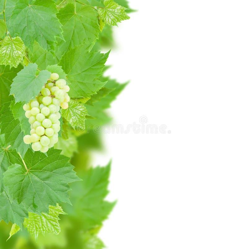 Uva bianca e confine delle foglie fotografie stock libere da diritti
