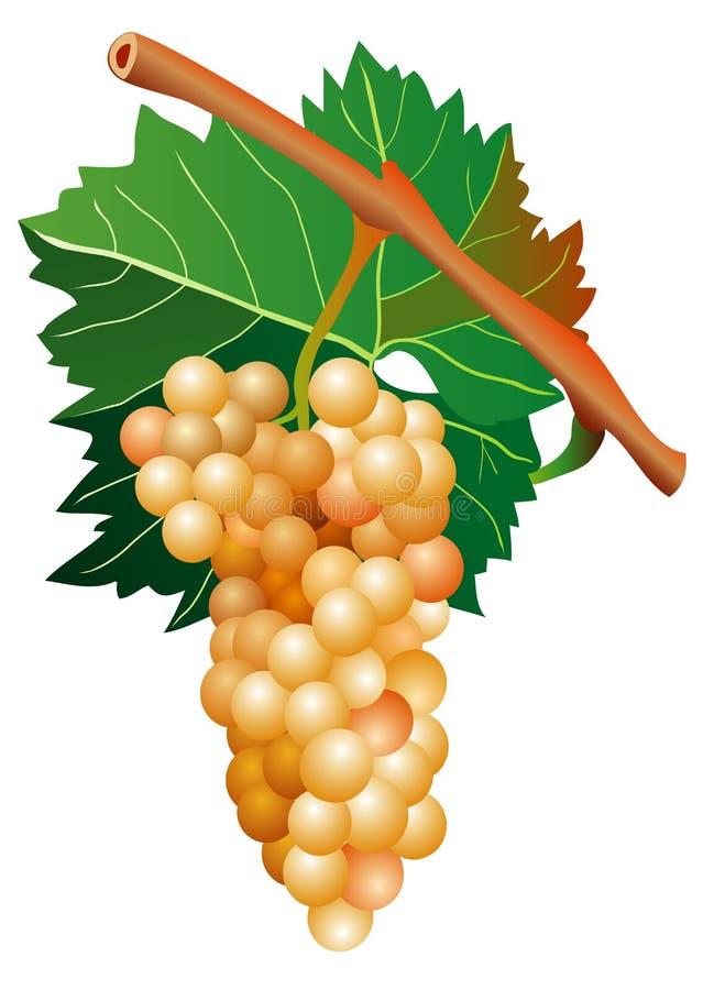 Uva blanca stock de ilustración