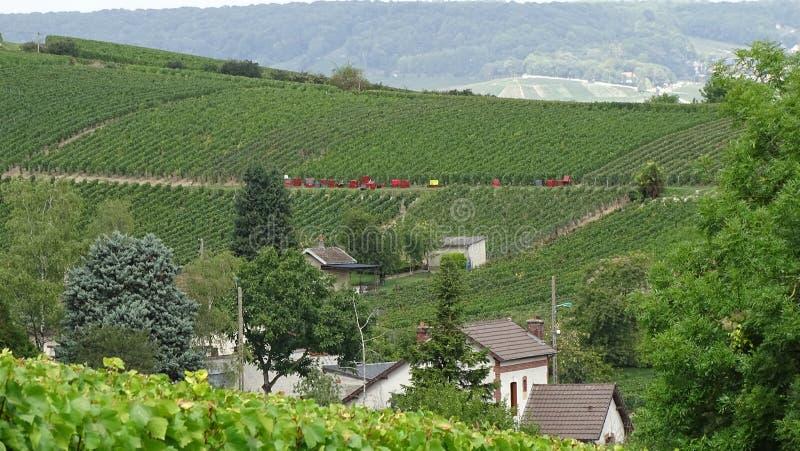 A uva colhe a à o ‰ pernay em França fotografia de stock royalty free
