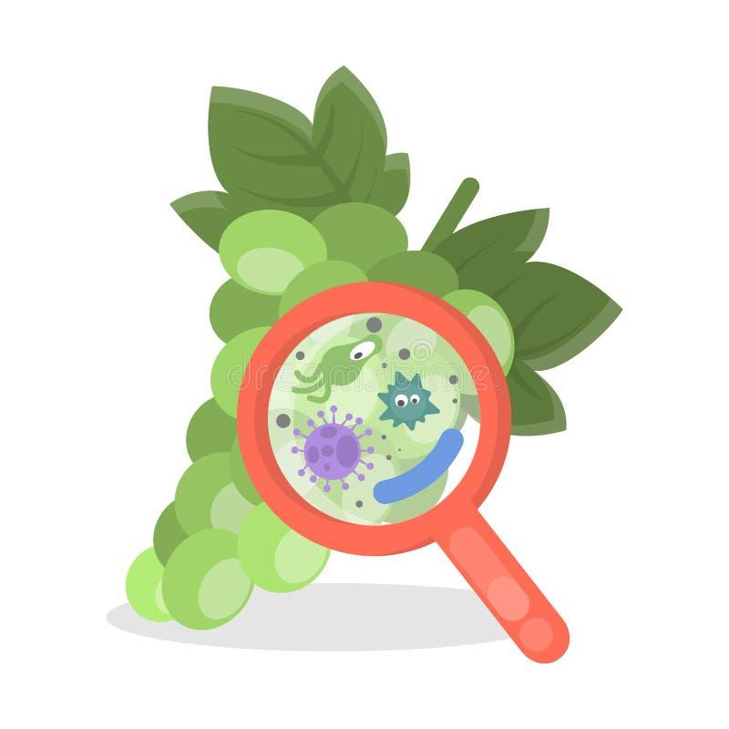 Uva con i germi illustrazione vettoriale
