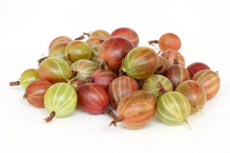 Uva-crispa do Ribes das groselhas em um fundo branco fotografia de stock