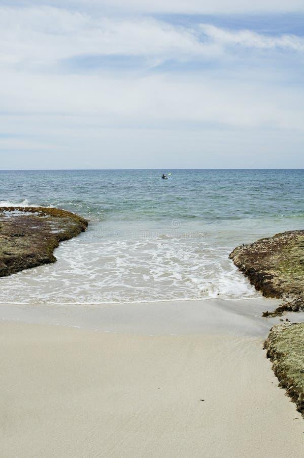 Uva de punta de Caribe photos stock