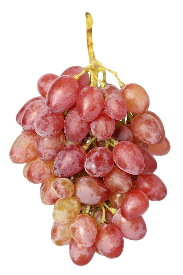 Uva dell'uva su fondo bianco fotografie stock libere da diritti