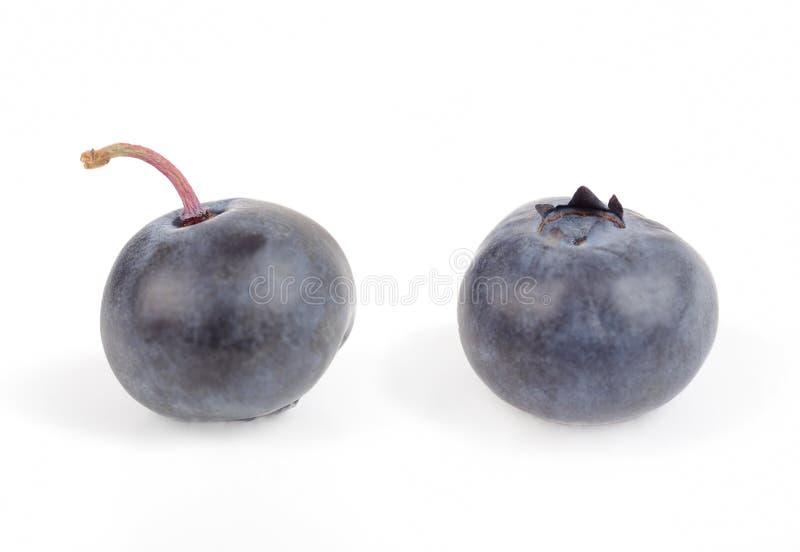 Uva-do-monte da uva-do-monte imagens de stock
