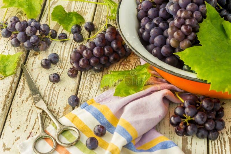 Uva fresca blu in ciotola arancio del metallo fotografia stock libera da diritti