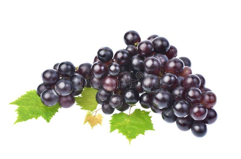 Uva nera con la foglia isolata su fondo bianco immagini stock