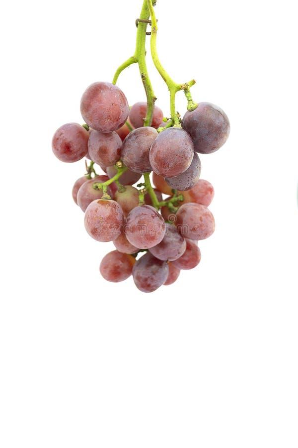 Uva roja en el fondo blanco fotos de archivo