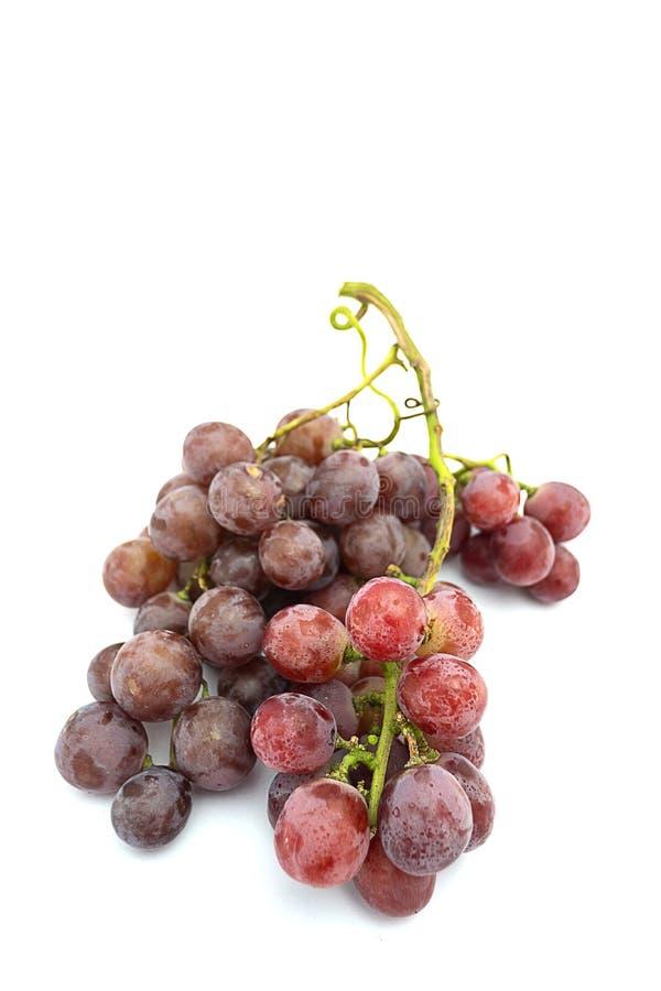 Uva roja en el fondo blanco foto de archivo