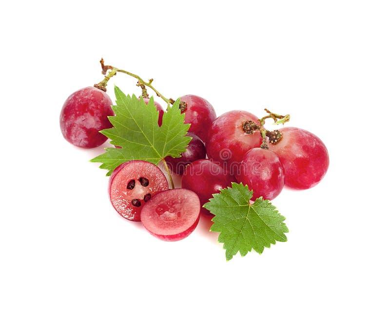 Uva rossa con il foglio isolato su priorità bassa bianca fotografia stock libera da diritti