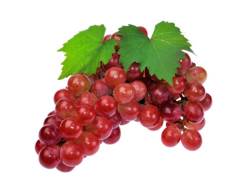 Uva rossa con il foglio isolato su priorità bassa bianca fotografie stock libere da diritti