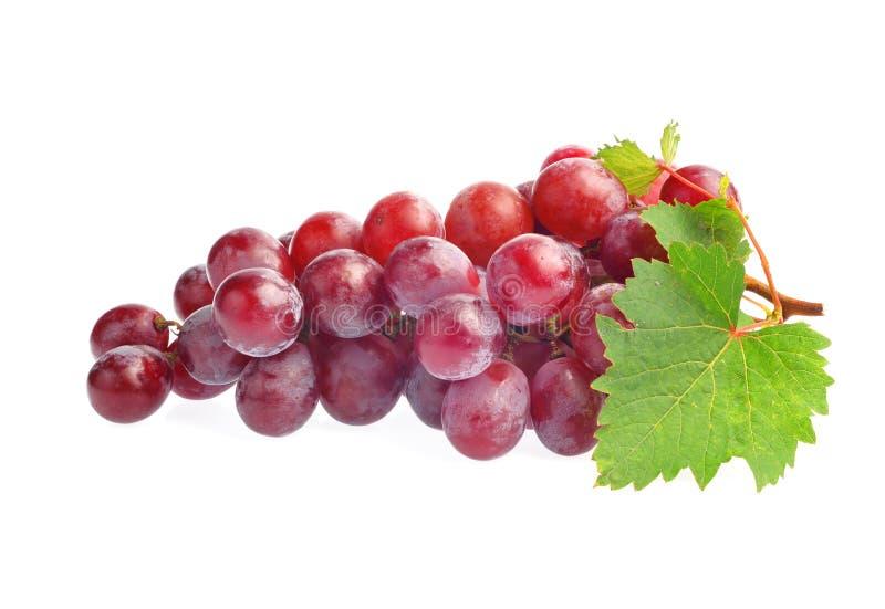 Uva rossa con il foglio isolato su priorità bassa bianca fotografia stock