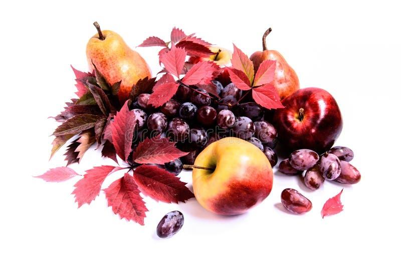 Uva rossa con le foglie, le mele e le pere di autunno fotografia stock libera da diritti