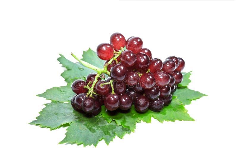 Uva rossa e foglie con le gocce di acqua, isolate su fondo bianco immagine stock