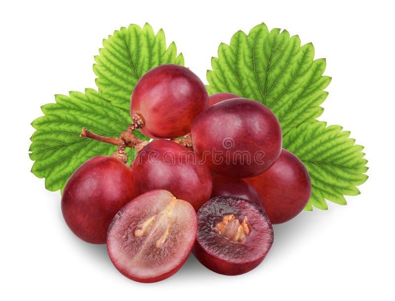 Uva rossa fresca con la foglia verde isolata su bianco fotografia stock
