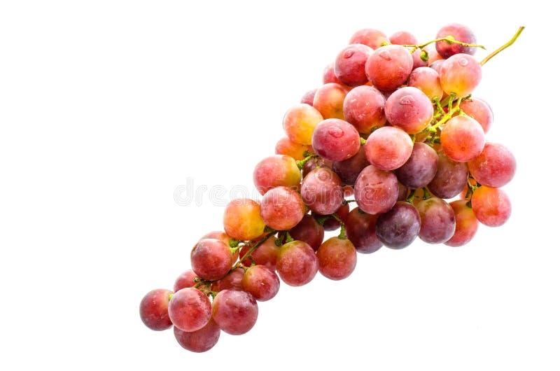 Uva rossa, fresca con le gocce di acqua Isolato sul backgrou bianco fotografia stock libera da diritti