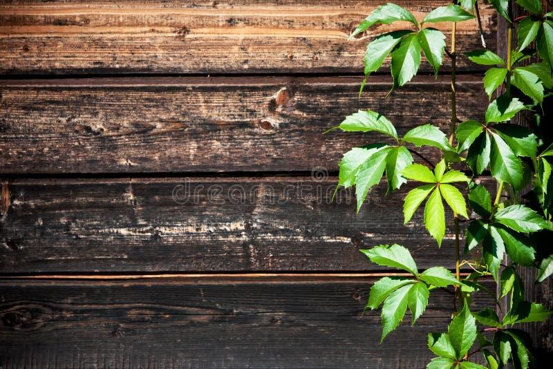 Uva selvaggia contro un fondo di legno fotografie stock libere da diritti