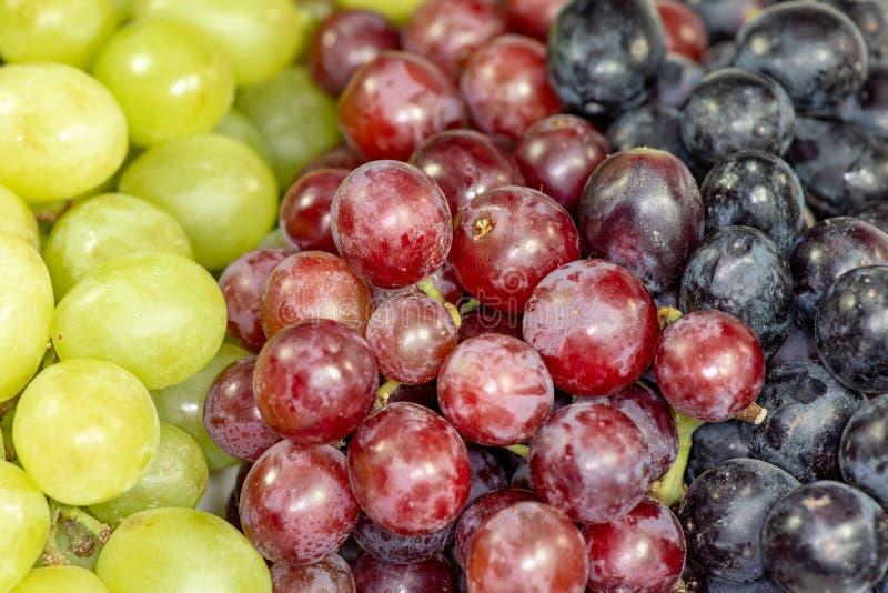 Uva senza semi nera, rossa, verde in una ciotola bianca profonda immagine stock libera da diritti