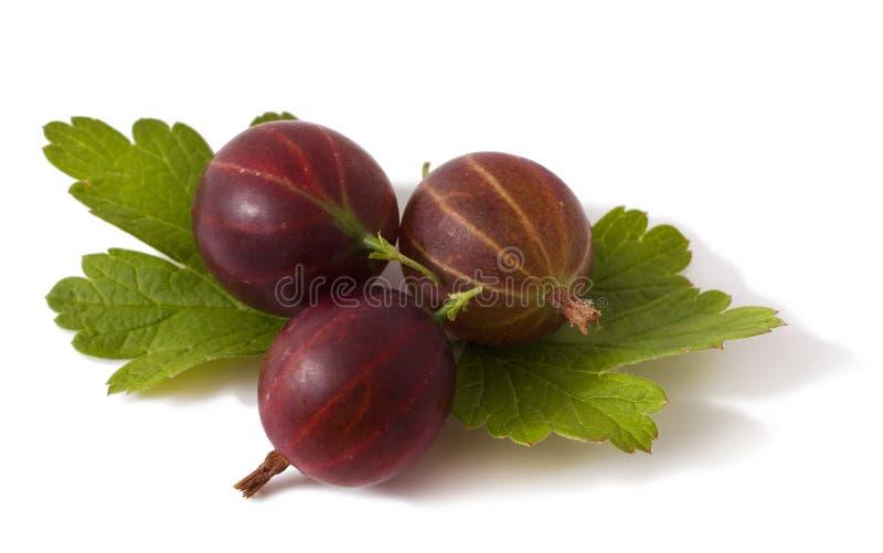 Uva spina su un bianco immagini stock