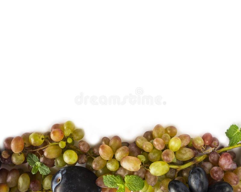 Uva su priorità bassa bianca Uva, prugne e foglie di menta mature al confine dell'immagine con lo spazio della copia per testo Vi immagini stock