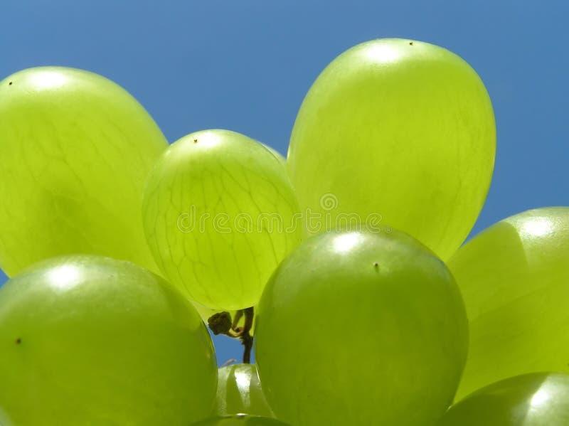 Uva verde immagini stock