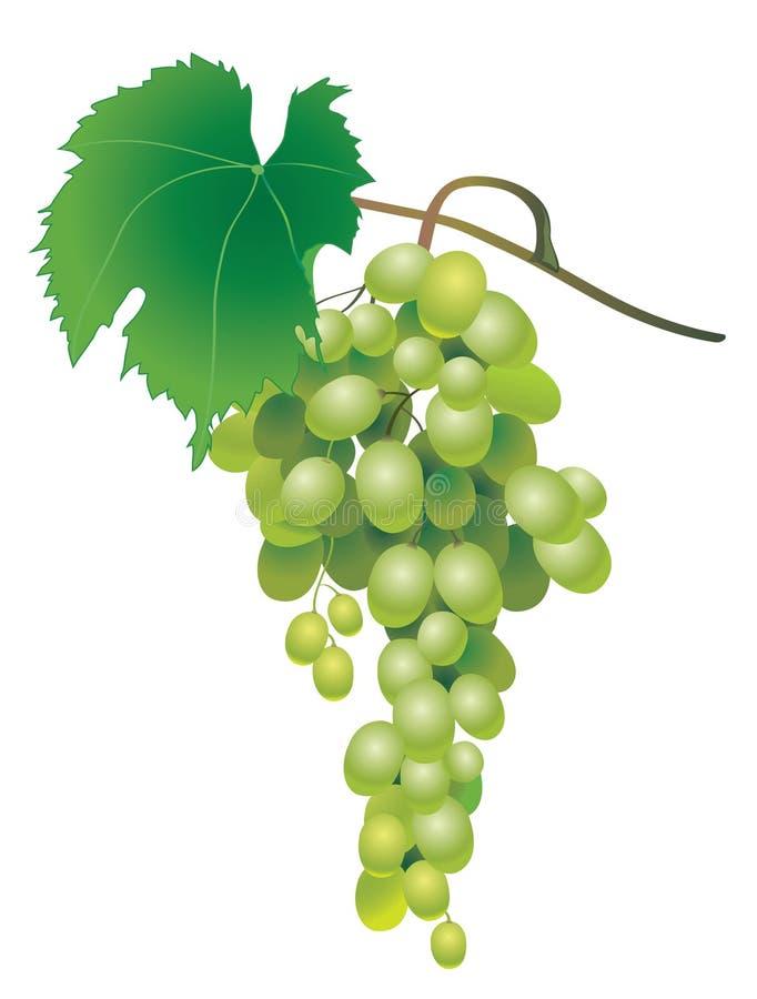 Uva verde stock de ilustración