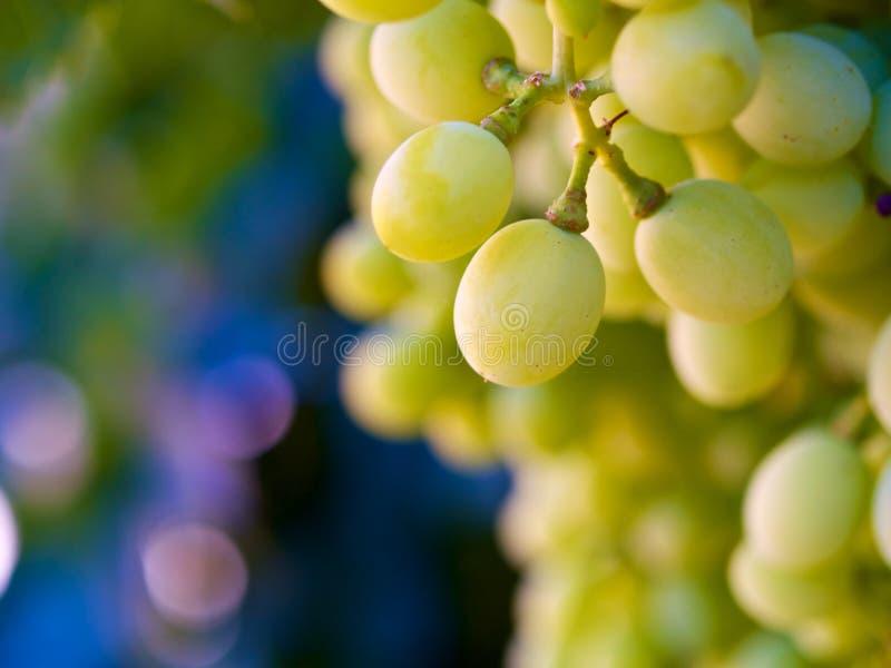 Uva verde davanti ad un fondo vago fotografie stock