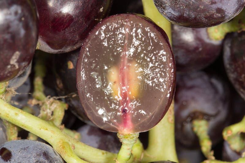A uva vermelha com água deixa cair, fundo do close up foto de stock
