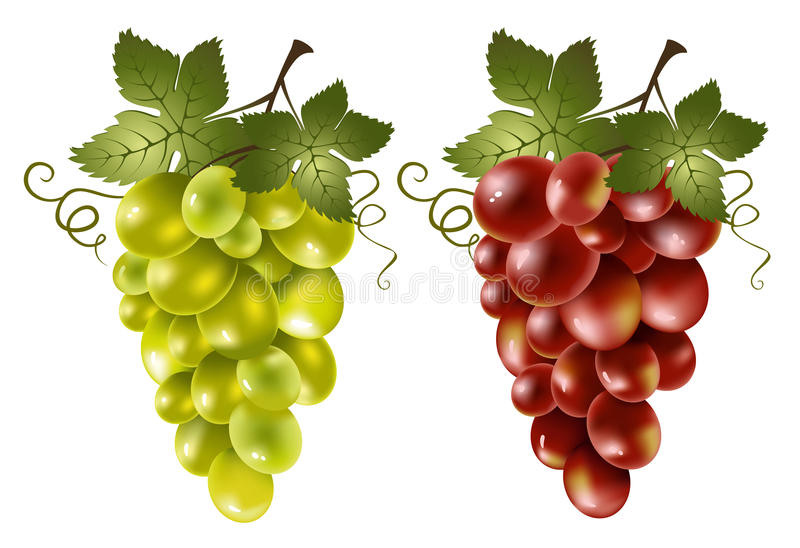 Uva vermelha e verde ilustração do vetor