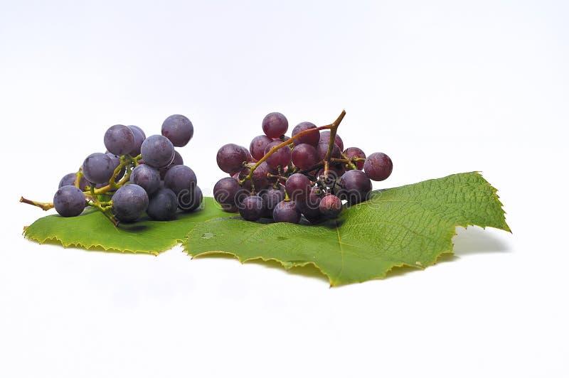 Uva viola isolata. fotografia stock