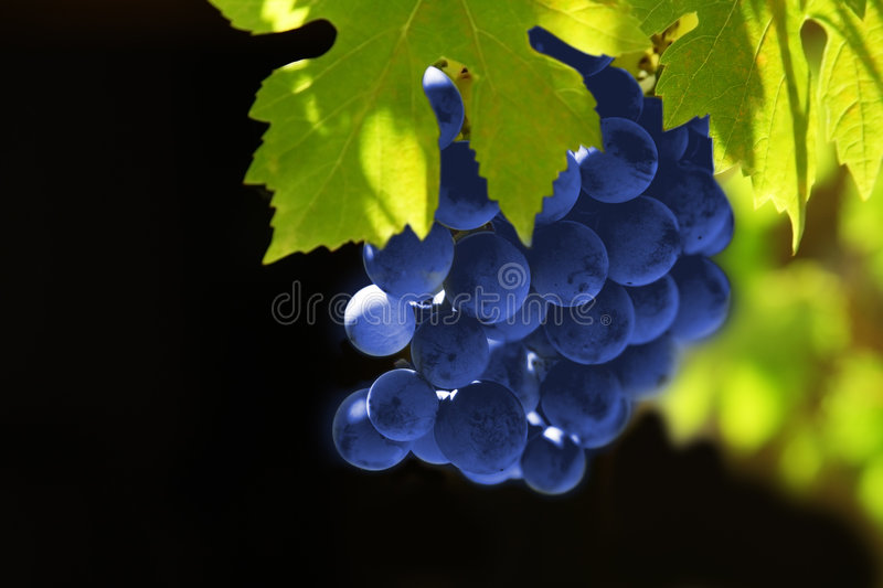 Uvas fotos de stock