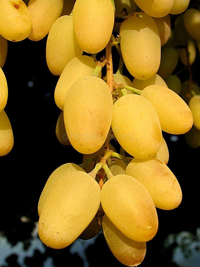 Uvas amarelas imagem de stock