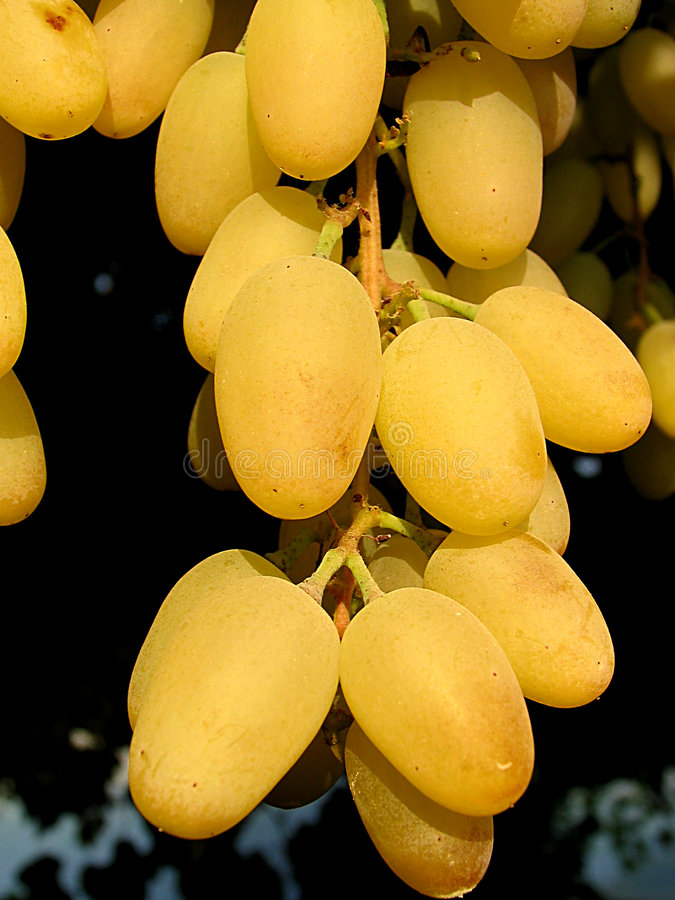 Uvas amarillas imagen de archivo
