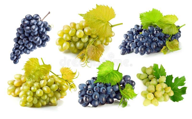 Uvas azuis e verdes ajustadas com folha fotografia de stock