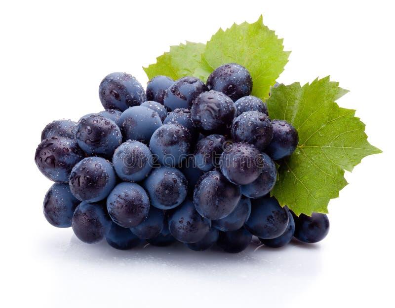 Uvas azuis molhadas com as folhas isoladas no fundo branco fotos de stock royalty free