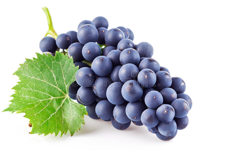 Uvas azules con la hoja verde foto de archivo