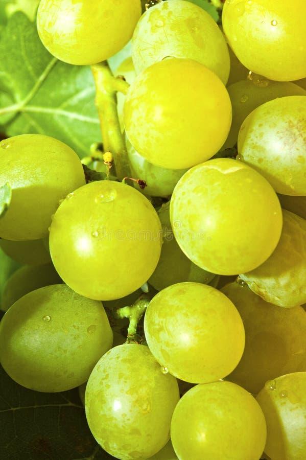 Uvas blancas frescas imagen de archivo libre de regalías