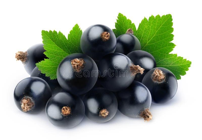 Uvas brancas isoladas imagem de stock