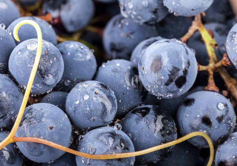 Uvas com gotas da água fotos de stock royalty free