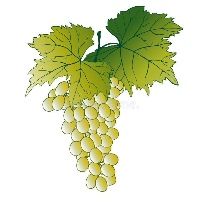 Uvas con las hojas ilustración del vector