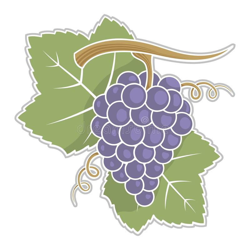 Uvas con las hojas stock de ilustración