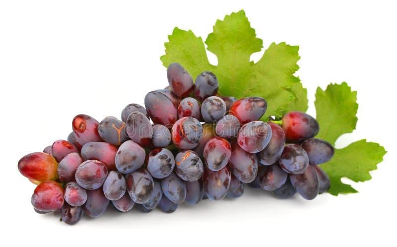 Uvas con las hojas imágenes de archivo libres de regalías