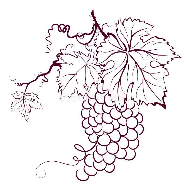 Uvas con las hojas libre illustration