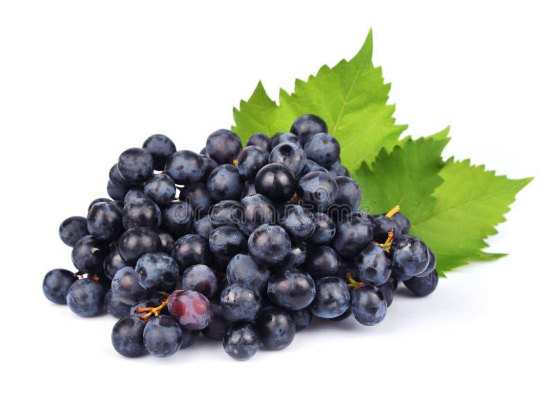 Uvas con las hojas imagen de archivo