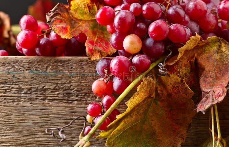 Uvas con las hojas de la uva foto de archivo libre de regalías